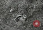 Image of US troops bivouaced on Guam Guam Mariana Islands, 1944, second 60 stock footage video 65675062234