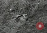 Image of US troops bivouaced on Guam Guam Mariana Islands, 1944, second 61 stock footage video 65675062234