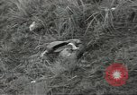 Image of US troops bivouaced on Guam Guam Mariana Islands, 1944, second 62 stock footage video 65675062234