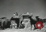 Image of Soviet farmers cutting and threshing stalks of grain during World War 2 Soviet Union, 1941, second 12 stock footage video 65675062264