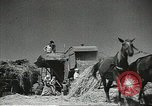 Image of Soviet farmers cutting and threshing stalks of grain during World War 2 Soviet Union, 1941, second 14 stock footage video 65675062264