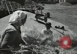 Image of Soviet farmers cutting and threshing stalks of grain during World War 2 Soviet Union, 1941, second 23 stock footage video 65675062264