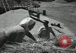 Image of Soviet farmers cutting and threshing stalks of grain during World War 2 Soviet Union, 1941, second 24 stock footage video 65675062264