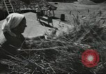 Image of Soviet farmers cutting and threshing stalks of grain during World War 2 Soviet Union, 1941, second 25 stock footage video 65675062264