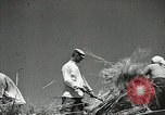 Image of Soviet farmers cutting and threshing stalks of grain during World War 2 Soviet Union, 1941, second 28 stock footage video 65675062264