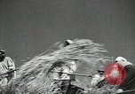 Image of Soviet farmers cutting and threshing stalks of grain during World War 2 Soviet Union, 1941, second 29 stock footage video 65675062264
