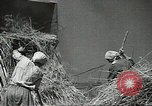 Image of Soviet farmers cutting and threshing stalks of grain during World War 2 Soviet Union, 1941, second 30 stock footage video 65675062264
