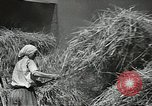Image of Soviet farmers cutting and threshing stalks of grain during World War 2 Soviet Union, 1941, second 31 stock footage video 65675062264