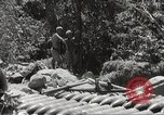 Image of Japanese air operations at Clark Field Philippines, 1942, second 51 stock footage video 65675062361
