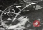 Image of Japanese soldiers Philippines, 1942, second 40 stock footage video 65675062362