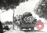 Image of Japanese soldiers Philippines, 1942, second 46 stock footage video 65675062363