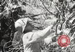 Image of Japanese soldiers Philippines, 1942, second 30 stock footage video 65675062364
