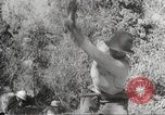 Image of Japanese soldiers Philippines, 1942, second 39 stock footage video 65675062364