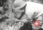Image of Japanese soldiers Philippines, 1942, second 49 stock footage video 65675062364