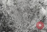 Image of Japanese soldiers Philippines, 1942, second 57 stock footage video 65675062364