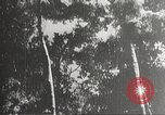 Image of Japanese soldiers Philippines, 1942, second 3 stock footage video 65675062367