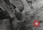 Image of Japanese soldiers Philippines, 1942, second 11 stock footage video 65675062367