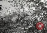 Image of Japanese soldiers Philippines, 1942, second 41 stock footage video 65675062370