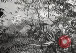Image of Japanese soldiers Philippines, 1942, second 42 stock footage video 65675062370