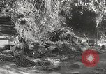 Image of Japanese soldiers Philippines, 1942, second 44 stock footage video 65675062372
