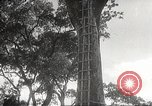 Image of Japanese soldiers Corregidor Island Philippines, 1942, second 7 stock footage video 65675062379