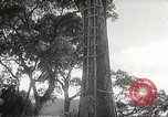Image of Japanese soldiers Corregidor Island Philippines, 1942, second 8 stock footage video 65675062379