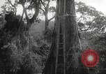 Image of Japanese soldiers Corregidor Island Philippines, 1942, second 12 stock footage video 65675062379