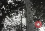 Image of Japanese soldiers Philippines, 1942, second 28 stock footage video 65675062382