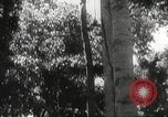Image of Japanese soldiers Philippines, 1942, second 29 stock footage video 65675062382