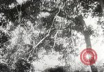 Image of Japanese soldiers Philippines, 1942, second 45 stock footage video 65675062382