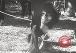 Image of Japanese soldiers Philippines, 1942, second 19 stock footage video 65675062385