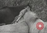 Image of Japanese soldiers Philippines, 1942, second 20 stock footage video 65675062385