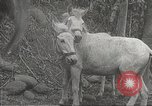 Image of Japanese soldiers Philippines, 1942, second 21 stock footage video 65675062385