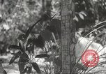 Image of Japanese soldiers Philippines, 1942, second 24 stock footage video 65675062385