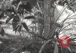 Image of Japanese soldiers Philippines, 1942, second 25 stock footage video 65675062385