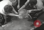 Image of dugong San Francisco California USA, 1955, second 14 stock footage video 65675062511