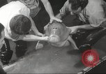 Image of dugong San Francisco California USA, 1955, second 15 stock footage video 65675062511