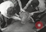 Image of dugong San Francisco California USA, 1955, second 16 stock footage video 65675062511
