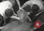 Image of dugong San Francisco California USA, 1955, second 17 stock footage video 65675062511