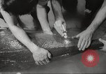 Image of dugong San Francisco California USA, 1955, second 19 stock footage video 65675062511
