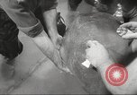 Image of dugong San Francisco California USA, 1955, second 24 stock footage video 65675062511