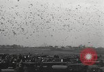 Image of released pigeons Jackson Heights Long Island New York USA, 1932, second 23 stock footage video 65675062521