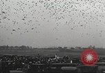 Image of released pigeons Jackson Heights Long Island New York USA, 1932, second 25 stock footage video 65675062521