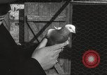 Image of released pigeons Jackson Heights Long Island New York USA, 1932, second 47 stock footage video 65675062521