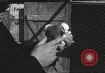 Image of released pigeons Jackson Heights Long Island New York USA, 1932, second 48 stock footage video 65675062521