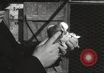 Image of released pigeons Jackson Heights Long Island New York USA, 1932, second 49 stock footage video 65675062521