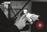 Image of released pigeons Jackson Heights Long Island New York USA, 1932, second 50 stock footage video 65675062521