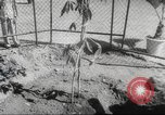Image of Queen Elizabeth II Jamaica, 1953, second 35 stock footage video 65675062537