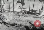 Image of Queen Elizabeth II Jamaica, 1953, second 36 stock footage video 65675062537