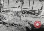Image of Queen Elizabeth II Jamaica, 1953, second 37 stock footage video 65675062537